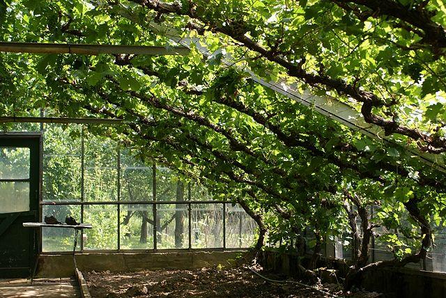 Historische tuin blijft sp nijmegen for Tuin aanleggen nijmegen